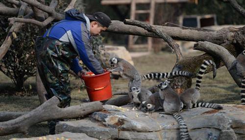 """猴年去上海动物园找""""大圣"""" 狐猴岛开馆、合趾猿首展"""