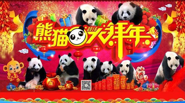 """""""功夫熊猫""""入驻上海野生动物园 春节与游客见面"""