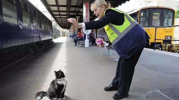英国火车站喵星人升职为黑猫巡逻长