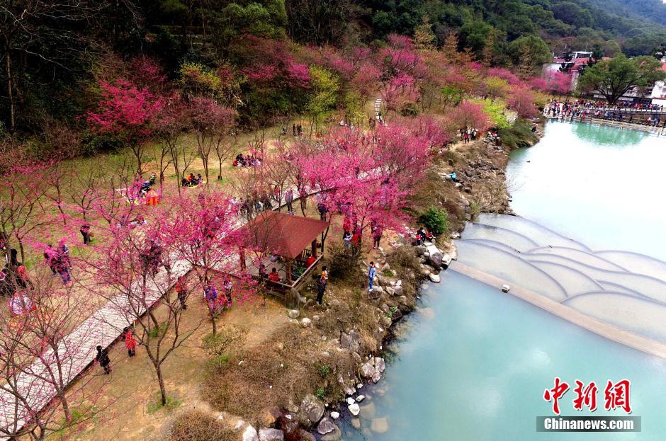 福州森林公园樱花盛开