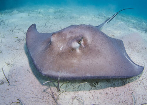 盘点海洋中最危险的动物