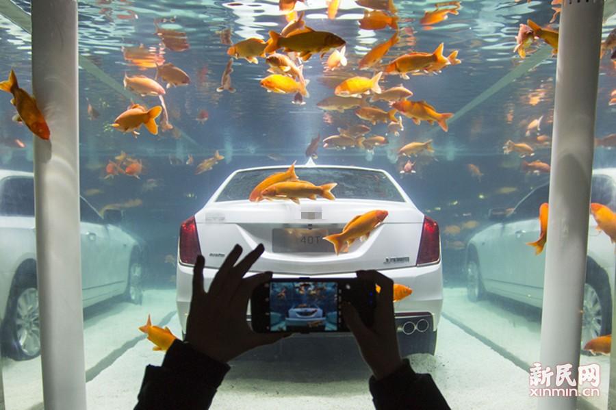 """城会玩!上海:小轿车入缸伴鱼""""游"""""""