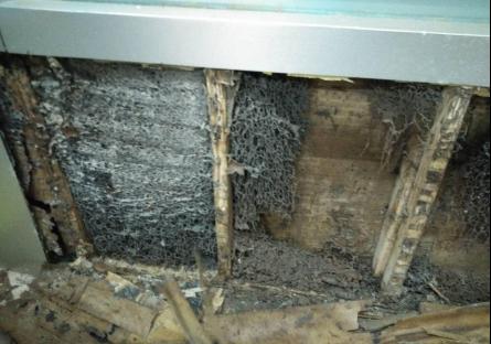 东莞白蚁防治中心:白蚁防治十大误区
