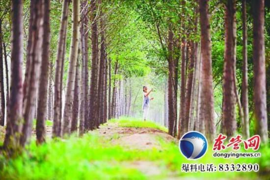 东营实施农田林网绿化工程建设 打造春意盎然绿色画卷