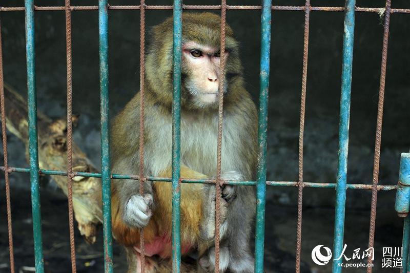 成都一野生动物救助中心遇资金困境 现不敢轻易接收动物