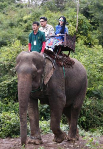 女王的大象2种子