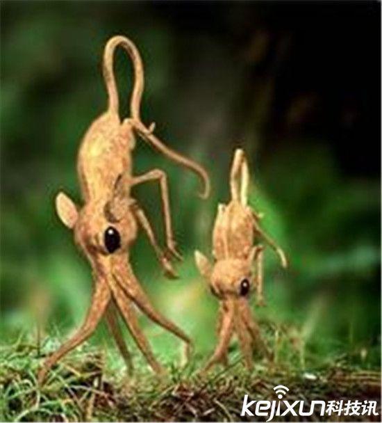 自然界中的奇异动物 用鼻子走路的大神图片