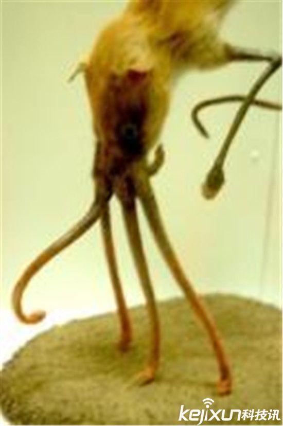 自然界中的奇异动物 用鼻子走路的大神!