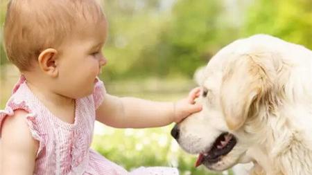 春季宠物易暴躁 医生提醒:需防被猫狗抓咬