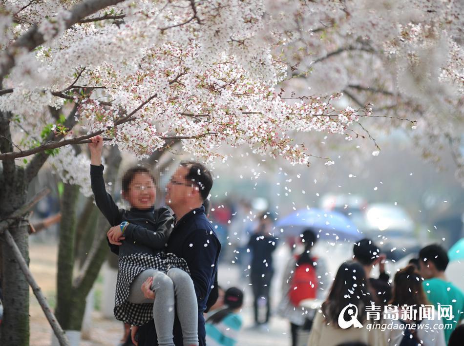 实拍不文明赏花 少数游客折枝造花雨(组图)