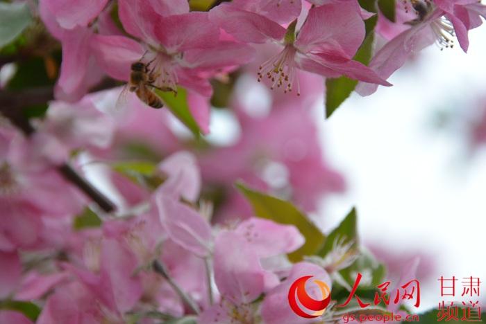 一只小蜜蜂,飞在花丛中(刘海天 摄)图片