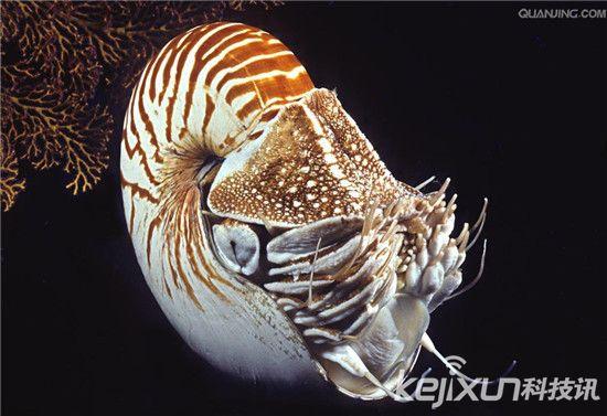 动物 海底 软体 550_377