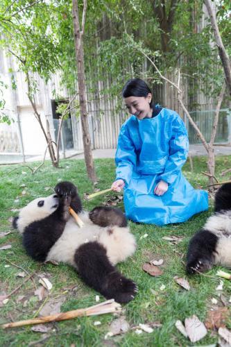 """熊猫繁育研究基地,与联合国开发计划署全球动物大使—大熊猫""""庆"""