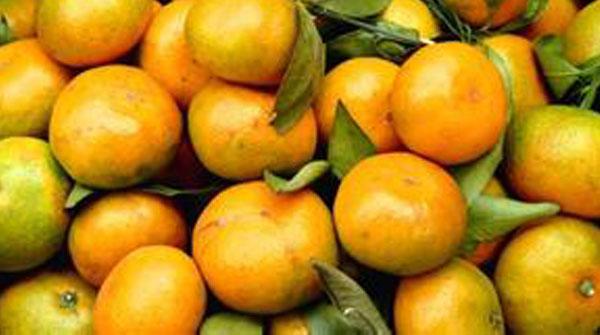 大陆对台产柑橘加强检疫 国台办:防止有害生物传入