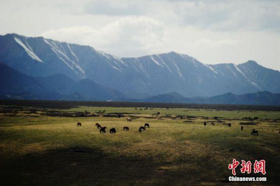 """牦牛和马是雪域高原上的""""精灵"""".杨艳敏 摄"""