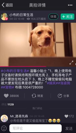 汪星人小布美拍获追捧 被赞实力演技派