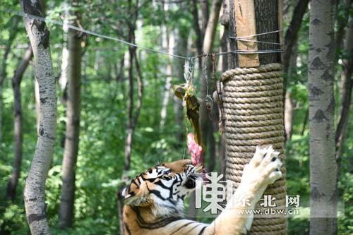 毗邻猴山,儿童动物村,狮虎散放区,依园内原始山林建造,登山路径全长