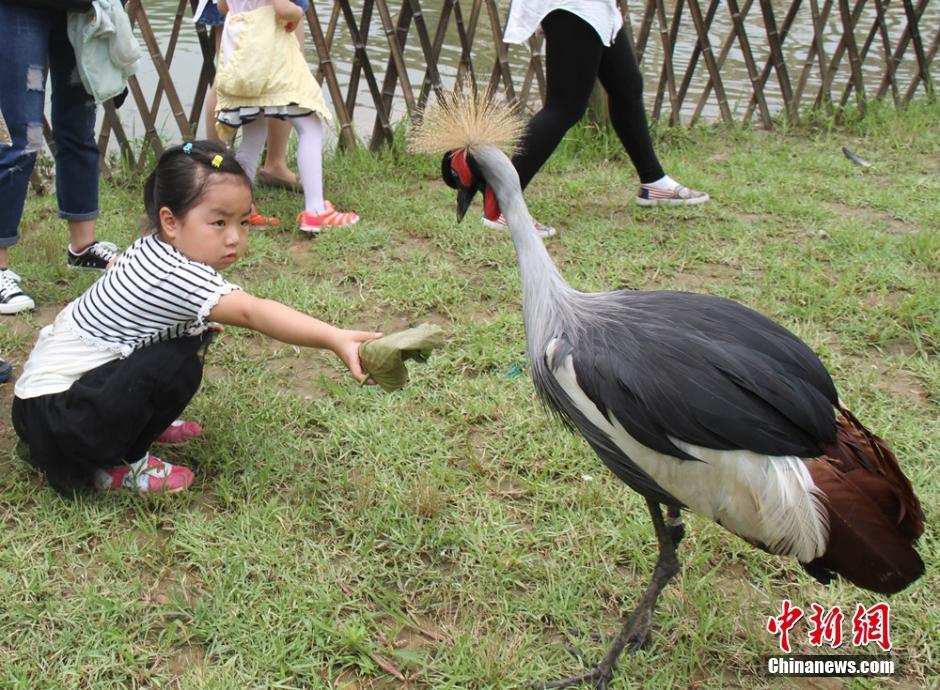 端午将至 小朋友走进动物园包粽子喂大象河马_社会