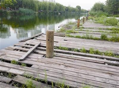 南运河亲水平台木栈道破损多 市民亲水步步惊心