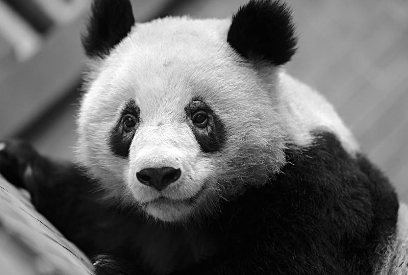 黑眼圈暗藏病症 3道药膳有效缓解熊猫眼