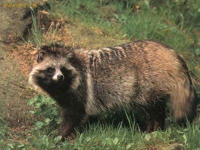 上海环境改善,专家呼吁路遇野生动物别喂食,你怎么看?