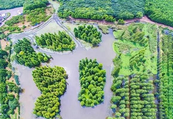 上海又一座超大超赞的郊野公园要开啦!水上森林宛如仙境!