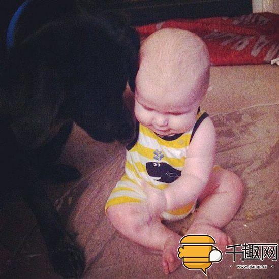 保姆虐待7个月大<a href='http://search.xinmin.cn/?q=婴儿' target='_blank' class='keywordsSearch'>婴儿</a>,宠物狗保护了他!