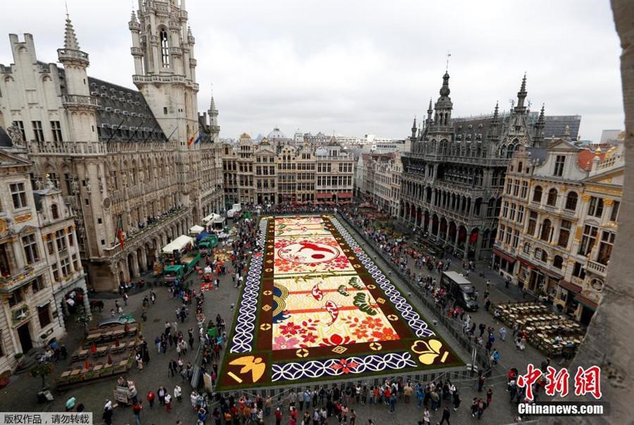 """比利时打造巨型鲜花地毯庆祝""""花毯节"""""""