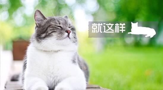 一号家居网爱宠大机密:一线城市的猫窝