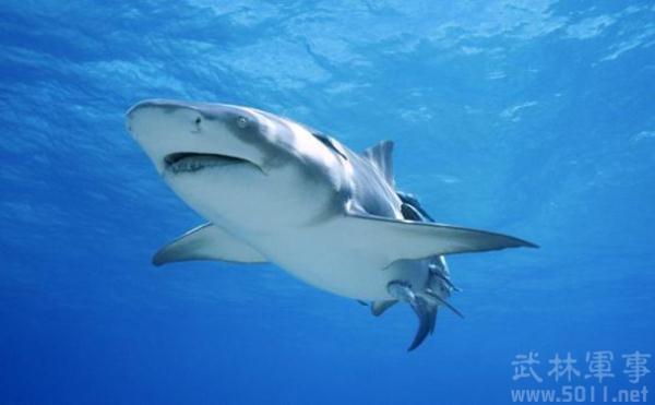 史前最凶猛的海洋生物巨齿鲨是怎么灭绝的