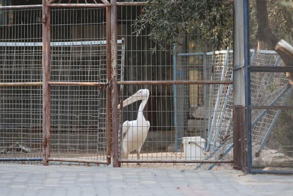 巴勒斯坦动物园因战火荒废 动物终获救_社会_新民网