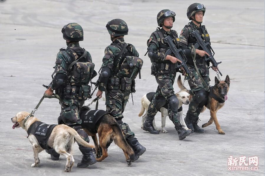 武警带犬巡逻。新民晚报张龙 摄