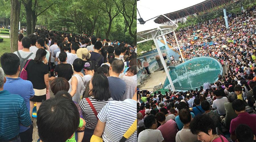 上海野生动物园沦陷了!好多人好多人好多人!排队3小时玩了30分钟!