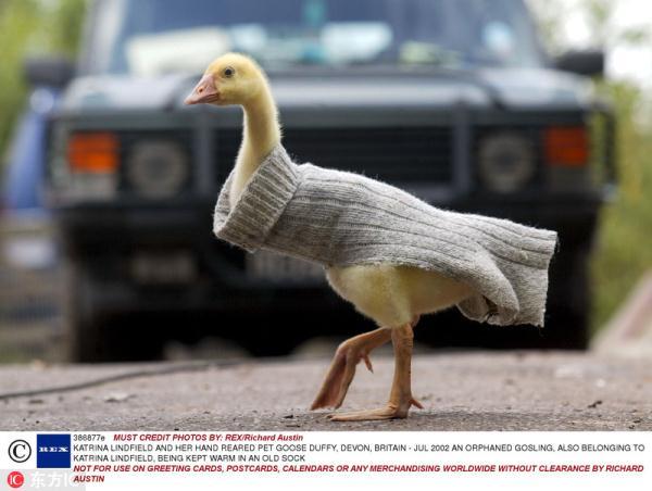 秋意渐浓 小动物们也要进入秋装模式啦_时尚_新民网