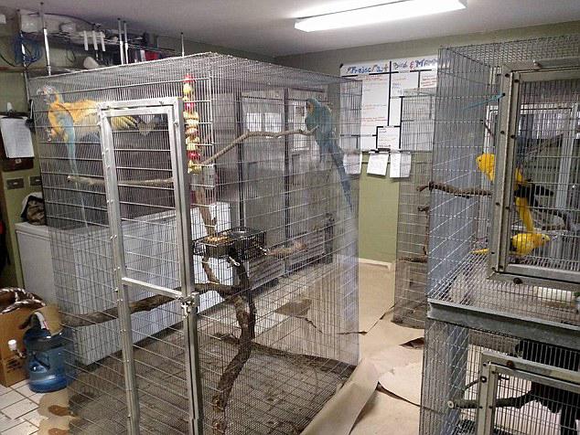 """飓风""""马修""""来袭 美佛州动物园将动物迁至室内"""