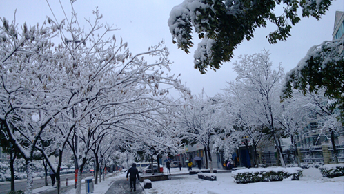 黑龙江多地低温迎今秋首场雪 路人穿上羽绒服
