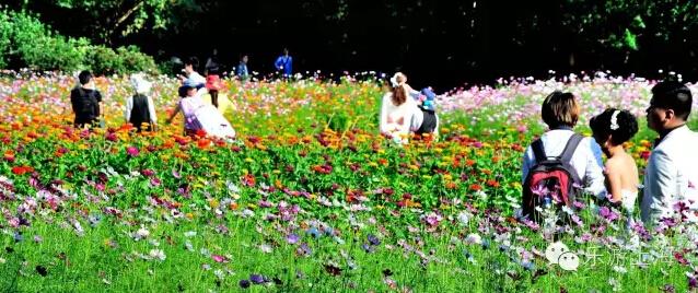 共青森林公园·彩色花海