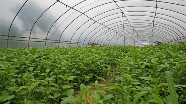 """上海""""菜篮子""""对接全国""""菜园子"""" 首批外延蔬菜生产基地挂牌"""