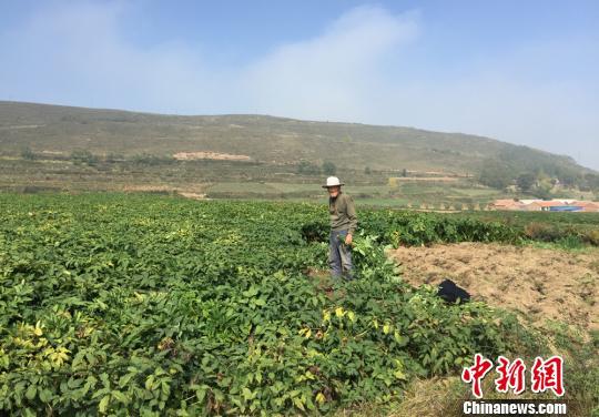 """甘肃华亭""""联合社+""""助发展 药农订单种植来致富"""