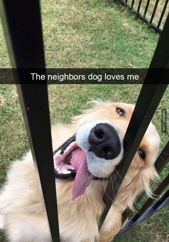 首页 娱乐 正文    狗狗绝对是世界上最可爱的动物之一,它们单纯善良
