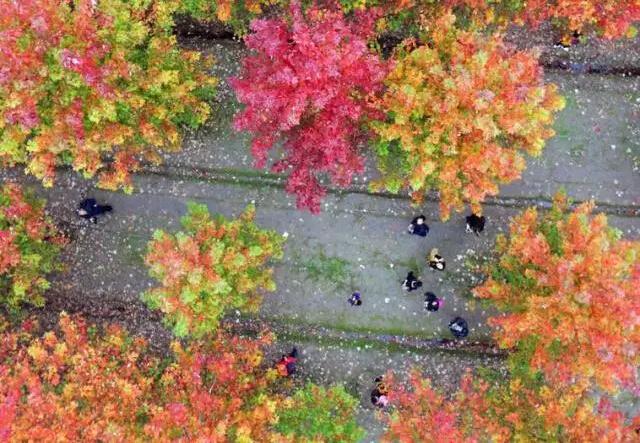 深秋的魔都已经美成了油画,一秒治愈冻僵的心!