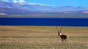 环保部:遥感监测显示33个国家级保护区人类活动影响剧烈