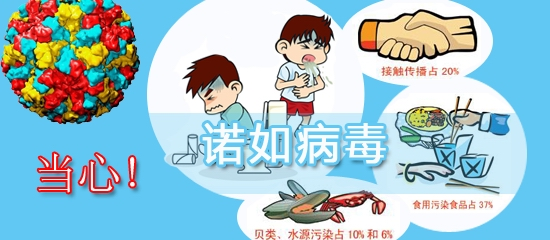 南京数十名小学生呕吐腹泻系诺如病毒感染