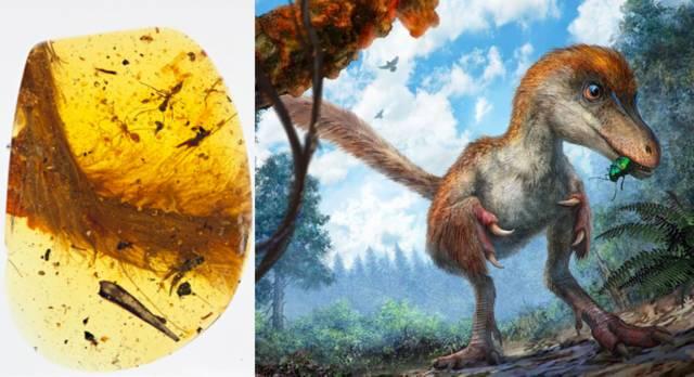 史上首件琥珀中的恐龙标本曝光:这只恐龙有点萌!