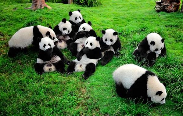 饲养员被大熊猫咬成重伤:手掌快被咬掉