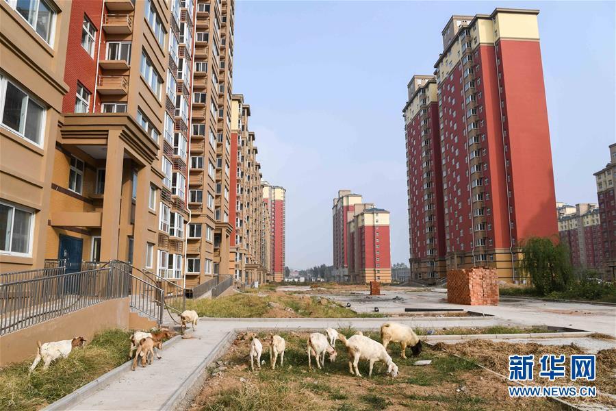 河南惠农工程烂尾 半拉子小区现羊群(组图)