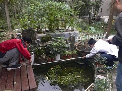 雨水怎样做到生态化利用?杭外学生搞了一项创新实验