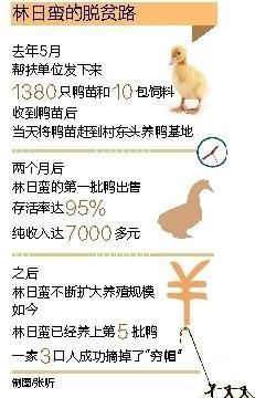 """东方贫困户在帮扶干部支持下 勤劳养鸭摘""""穷帽"""""""
