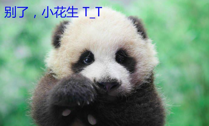 """心碎!上海首只熊猫宝宝""""花生""""和母亲""""帼帼""""双双离世!"""