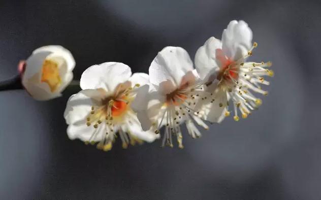 """""""新春嗨上海""""特别策划第二趴:寻花等春来 品味古情怀"""